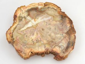 Zkamenělé dřevo, Madagaskar (40)