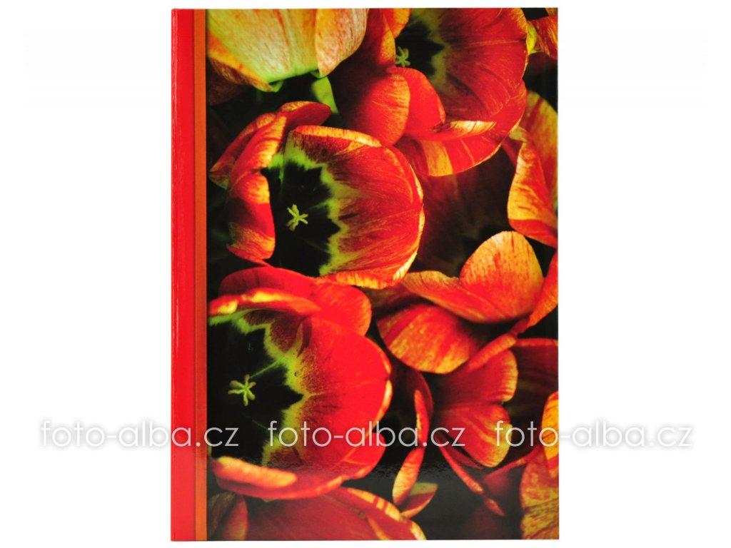 foto-album červené tulipány 300