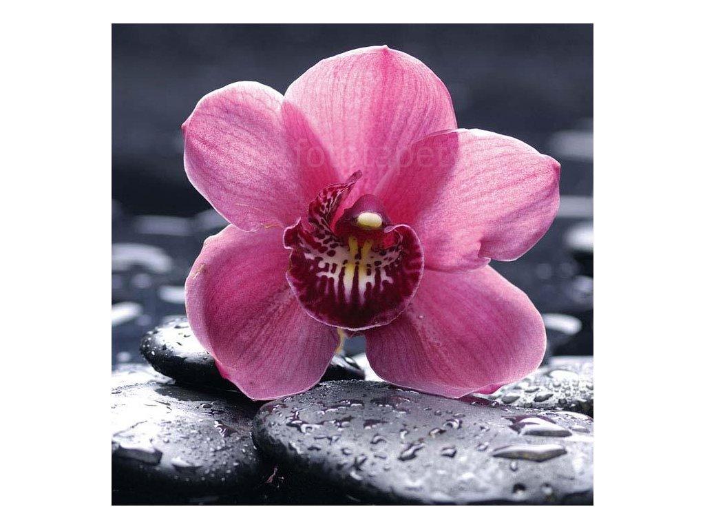 Samolepící fototapeta na podlahu - Orchidej, 170x170cm, 020