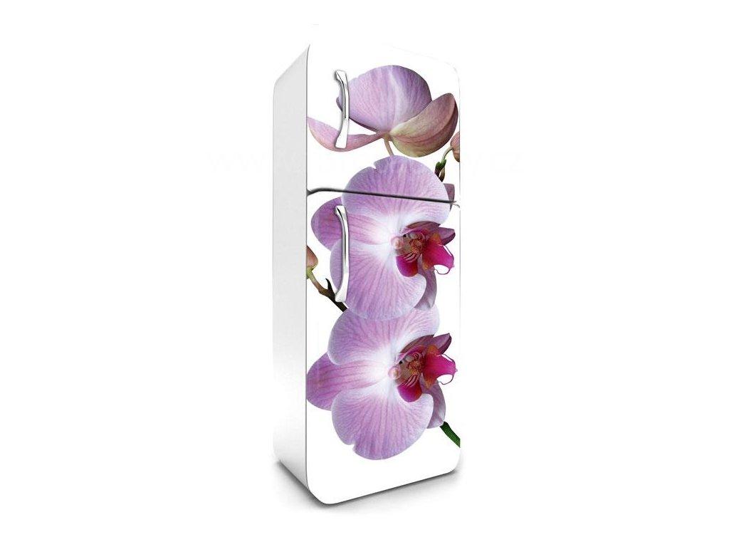 Samolepící fototapeta na lednici - Orchidej, 65x180cm, 024
