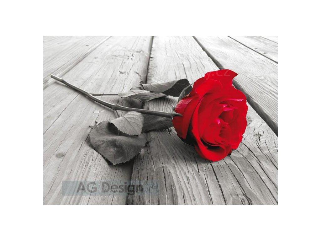 růže tapeta