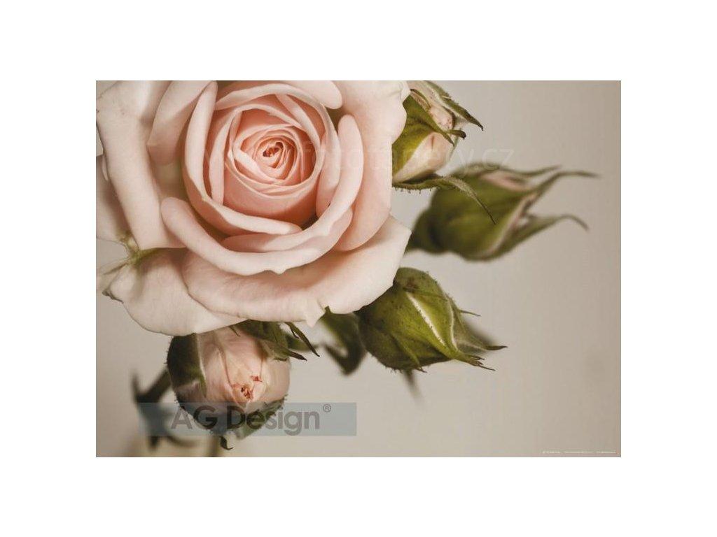 Jednodílná vliesová fototapeta Růžová růže FTN m 2620 rozměr 160x110cm