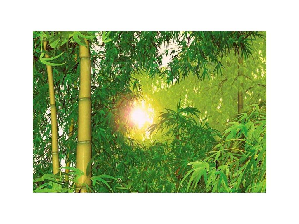 Osmidílná fototapeta Bamboo, 366x254 cm,skladem poslední 2 ks!!