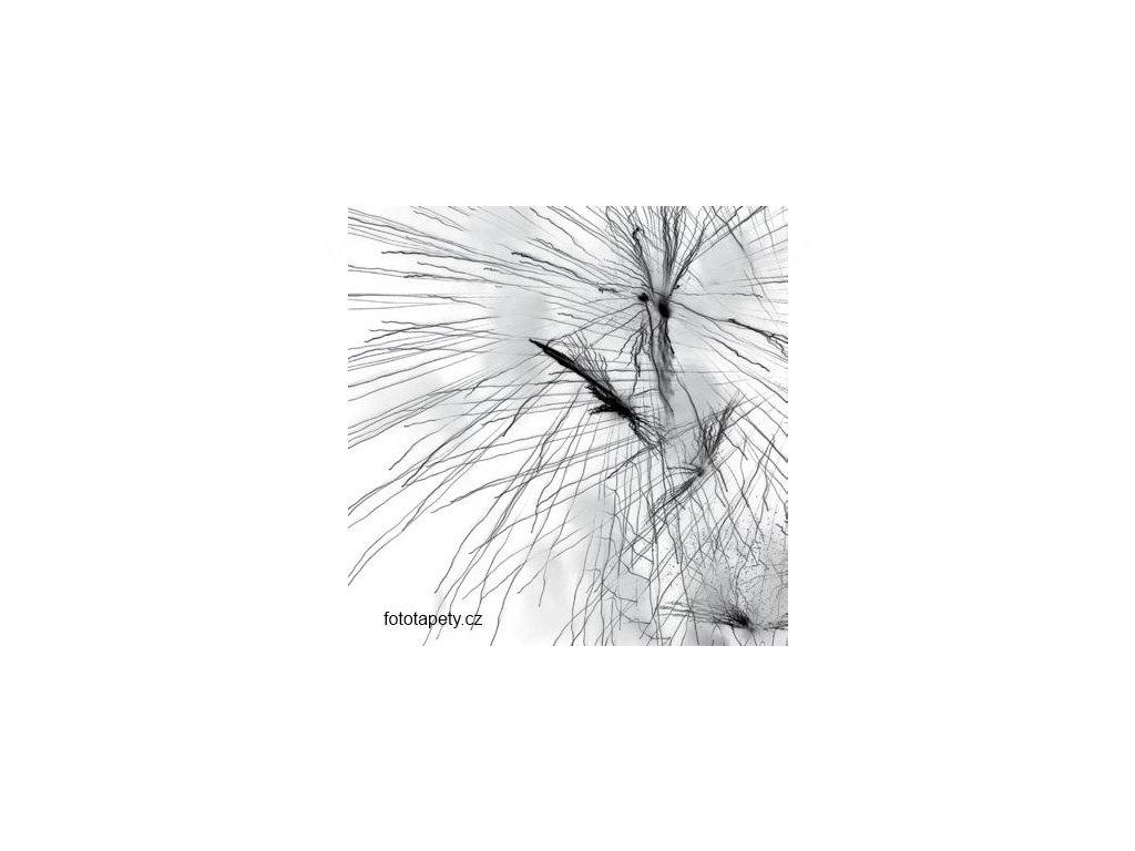 Samolepící velkoplošná nálepka - Pampeliška, 100x100cm