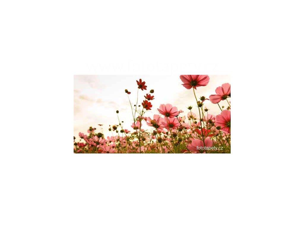 Samolepící velkoplošná nálepka - Luční květiny, 180x100cm