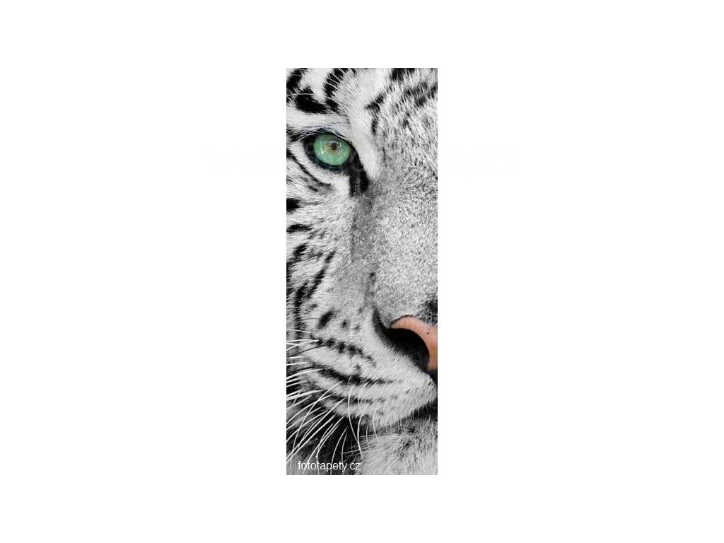 Samolepící velkoplošná nálepka - Tygr, 100x270cm
