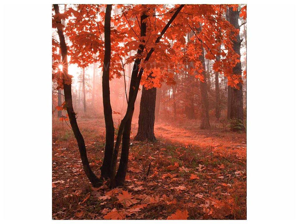 vliesová fototapeta Les v mlze