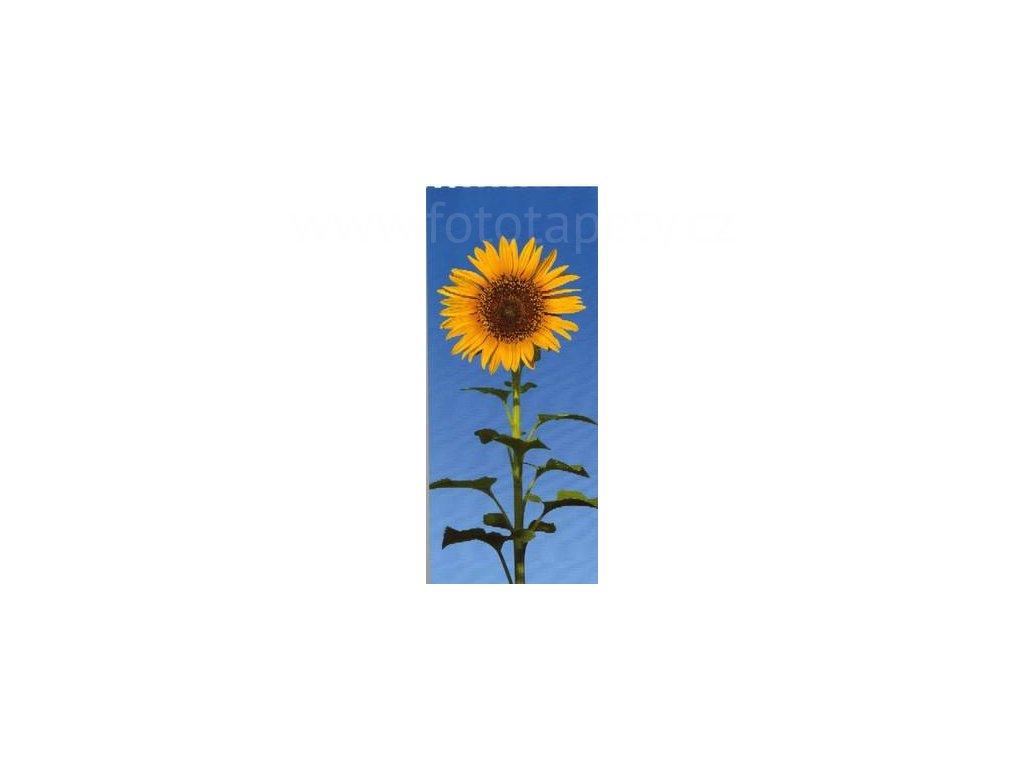 Dvoudílná obrazová tapeta Slunečnice 86 x 200cm, 2D ID 509, skladem poslední 1 ks!!!