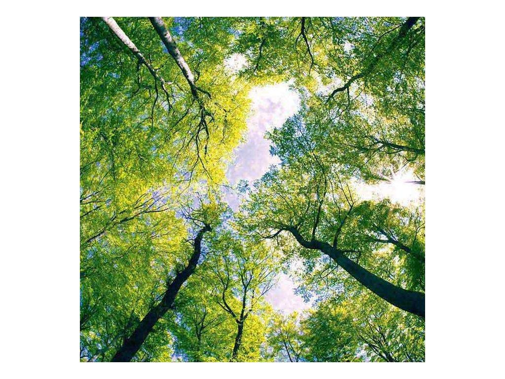 Samolepící fototapeta na podlahu - Klenby stromů, 170x170cm, 001