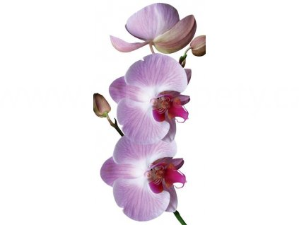 Samolepící fototapeta na podlahu - Orchidej, 85x170cm, 015