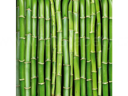Samolepící fototapeta na podlahu - Bambus, 170x170cm, 031