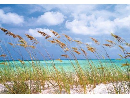 Ocean Breeze, National Geographic fototapeta, 8D 515, 368 x 254cm