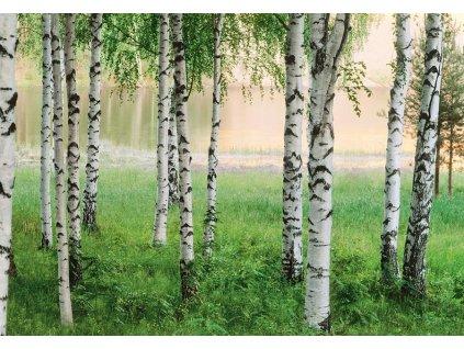 Papírová fototapeta Severský les, osmidílná, 366x254cm, 8D ID 290, skladem poslední 2 ks