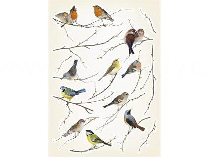 Samolepící dekorace Ptáci, 50x70cm