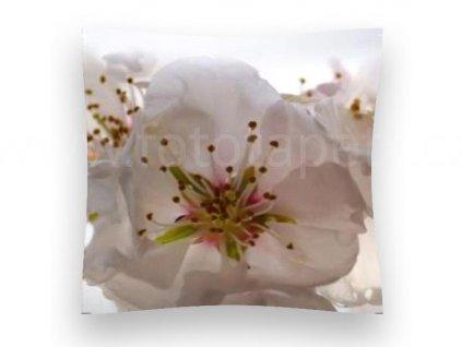 Dekorační foto polštářek Květy třešně, 45x45cm, CN3606