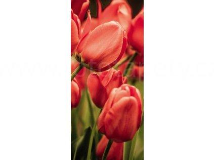 Samolepící fototapeta na dveře - Červené tulipány, 95x210 cm, D057