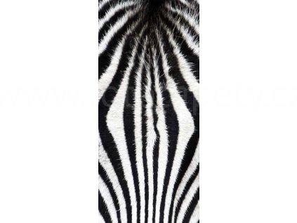 Samolepící fototapeta na dveře - Zebra, 95x210 cm, D060
