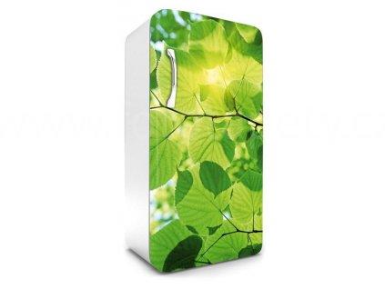 Samolepící fototapeta na lednici - Zelené listy, 65x120cm, 009