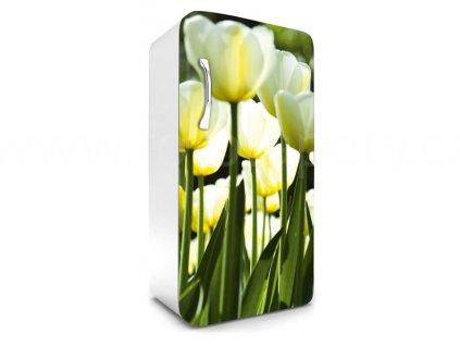 Samolepící fototapeta na lednici - Tulipány, 65x120cm, 026