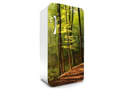 Samolepící fototapeta na lednici - Podzimní les, 65x120cm, 028