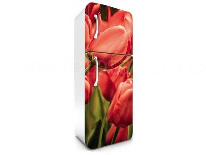 Samolepící fototapeta na lednici - Červené tulipány, 65x180cm, 012