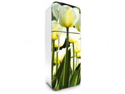 Samolepící fototapeta na lednici - Bílé tulipány, 65x180cm, 026