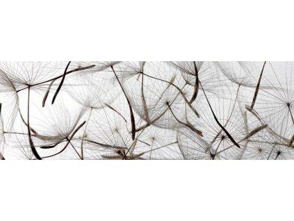 Samolepící fototapeta do kuchyně - Pampeliškové chmýří, 180x60cm, 050