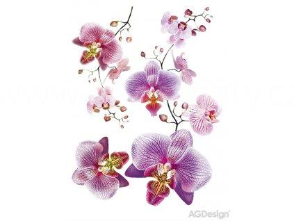 Samolepka na zeď - FIalová orchidej, 65x85cm, F0466