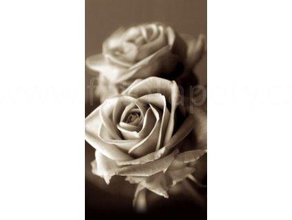 Foto závěs Růže, 140x245cm