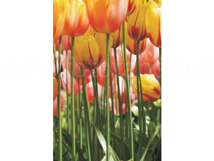Dvoudílná obrazová tapeta Žluté tulipány FT 0046, rozměr 180x 270cm, poslední 1 ks !!!