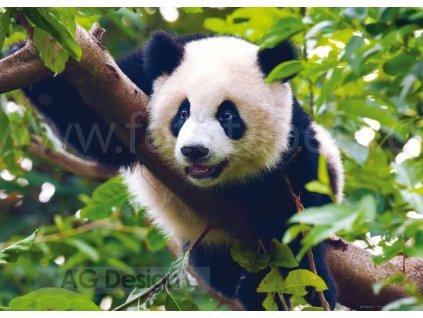 Jednodílná vliesová fototapeta Panda  FTN m 2610, rozměr 160x110cm