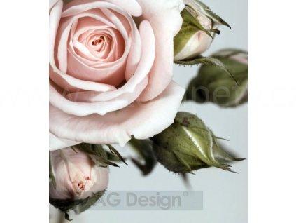 Dvoudílná vliesová fototapeta Růžová růže FTN xl 2506, rozměr 180x202cm