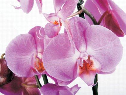 Čtyřdílná obrazová tapeta Fialové orchideje FTS 0049, rozměr 360 x 254cm,skladem 1ks!!