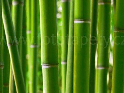 Čtyřdílná obrazová tapeta Bambus FTS 0170, rozměr 360 x 254cm