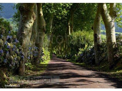 Čtyřdílná obrazová fototapeta Alej stromů FTS 1303, rozměr 360 x 254cm