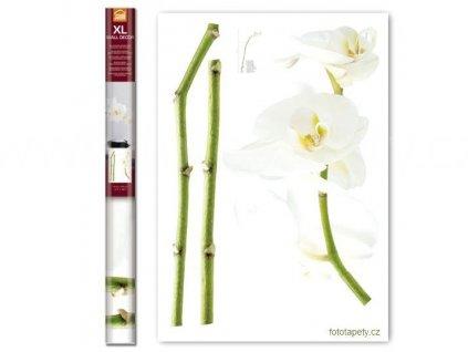 Samolepka na zeď Bílé orchideje, 70x100cm