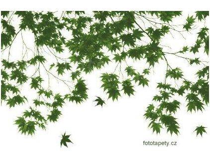 Maxiplakát - Autumn leaves - šířka 175 , výška 115cm, skladem poslední 1 ks !