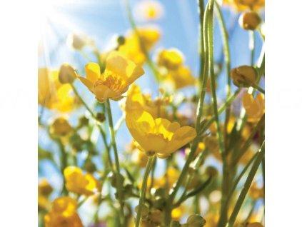 Třídílná vliesová fototapeta Žluté květy, rozměr 225x250cm, MS-3-0134