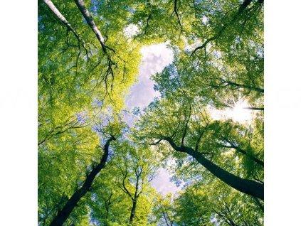 Třídílná vliesová fototapeta Klenby stromů, rozměr 225x250cm, MS-3-0104