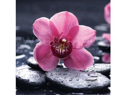 Třídílná vliesová fototapeta Orchidej, rozměr 225x250cm, MS-3-0120