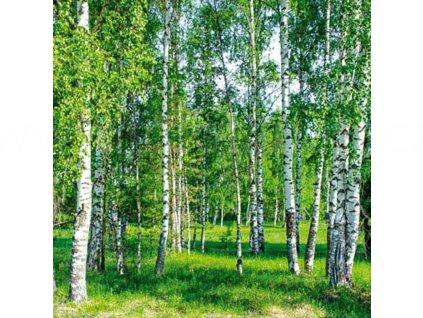 Třídílná vliesová fototapeta Březový les, rozměr 225x250cm, MS-3-0100