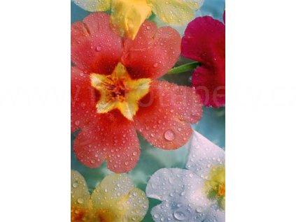 Čtyřdílná fototapeta Flowers, 183x254 cm, skladem poslední 2ks