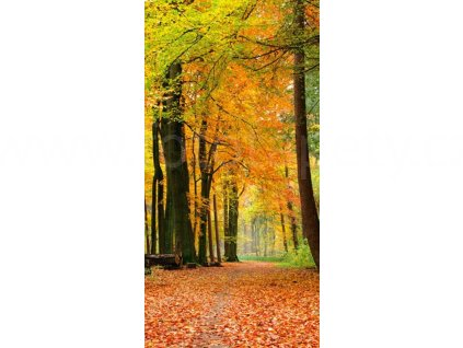 Dvoudílná vliesová fototapeta Podzimní les, rozměr 150x250cm, MS-2-0099