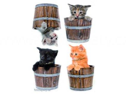 Samolepka na zeď Koťátka - Little cats, 50x70cm, skladem poslední 1ks