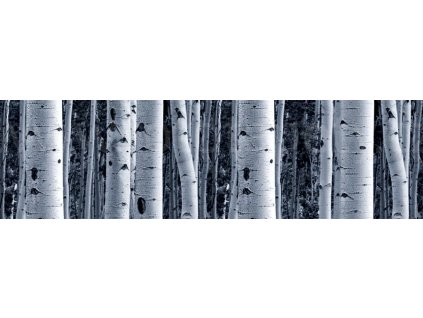 Samolepící bordura - Břízy, 14cm x 5m,  WB 8207