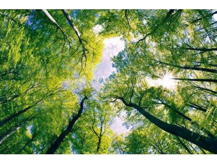 Třídílná vliesová fototapeta Klenby stromů, rozměr 330x220cm, XL 433