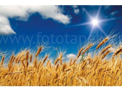 Pětidílná vliesová fototapeta Pšeničné pole, rozměr 375x250cm, MS-5-0136