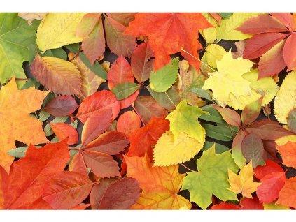 fototapeta Podzimní listí