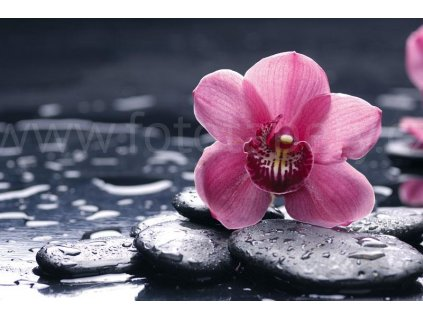 Pětidílná vliesová fototapeta Orchidej, rozměr 375x250cm, MS-5-0120