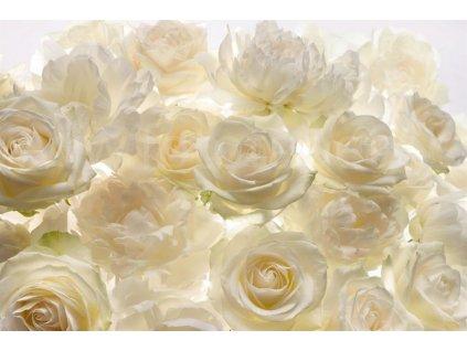 Čtyřdílná vliesová fototapeta Bílé růže, 368x248cm, XXL4-007